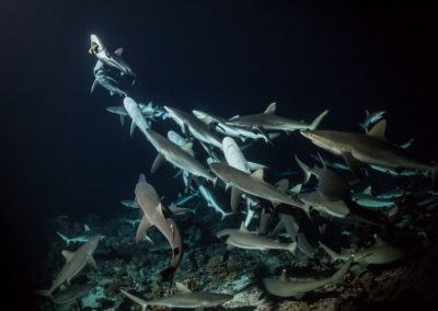 700 REQUINS DANS LA NUIT_25062017-DSC_4462 ∏Laurent Ballesta