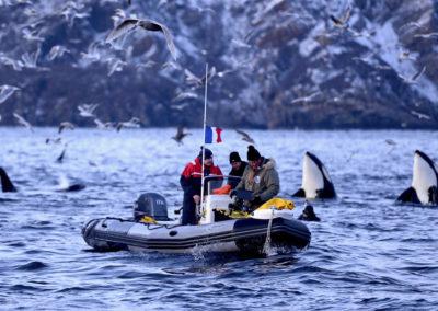 ORQUES_Mais-ils-sont-où-les-orques-Edit ©David Beecham