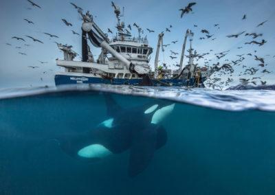 ORQUES_orque-bateau-peche ©Audun Rikardsen